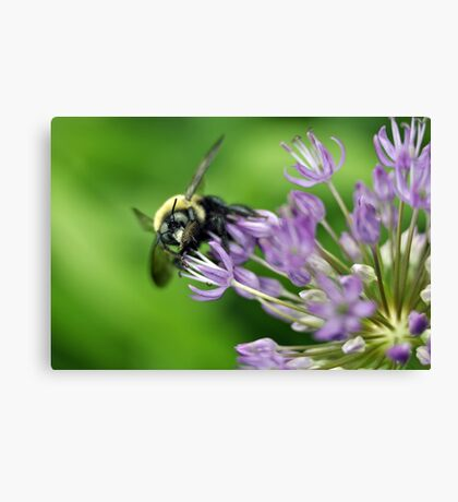 Here's Lookin' At You! Canvas Print