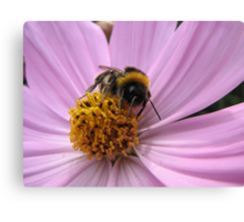 Bumble-bee in action Canvas Print