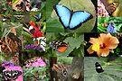 Butterfly Love by Jo Nijenhuis