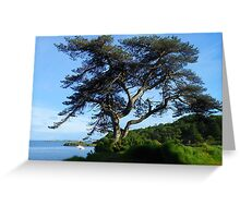 A Lone Tree in Lews Castle Grounds Greeting Card