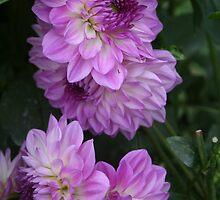 Pink Delight by Karen Kaleta