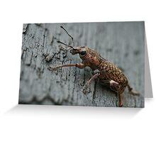 Weevil #2 Greeting Card