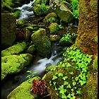 Fresh Green, Great Smoky Mountains National Park by ThomasRBiggs