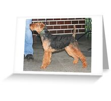 Well-trained Welsh Terrier Greeting Card