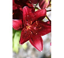 Velvet Flower Photographic Print