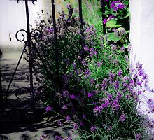 Lavender gate by Pat Shawyer