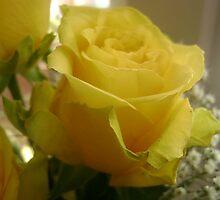 Yellow rose by Noxious-Nikki