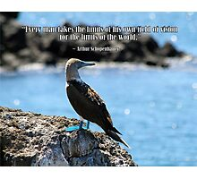 Wise Bird Philosophy Photographic Print