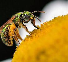 Green Bee  by PamelaJoPhoto