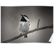 Little Biddy Bird Poster