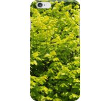 Lost in the leaves iPhone Case/Skin