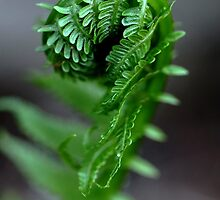 Fern Frond by Debbie Oppermann