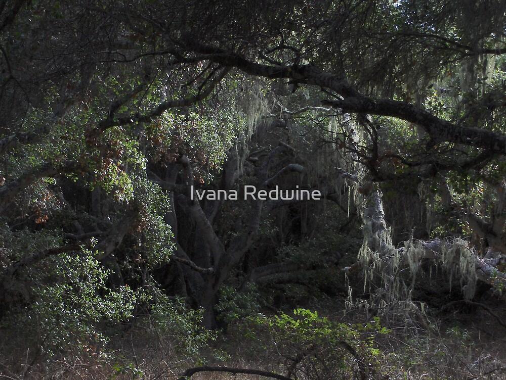 Beautiful Trees and Moss by Ivana Redwine