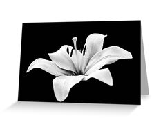 White lily - monochrome Greeting Card