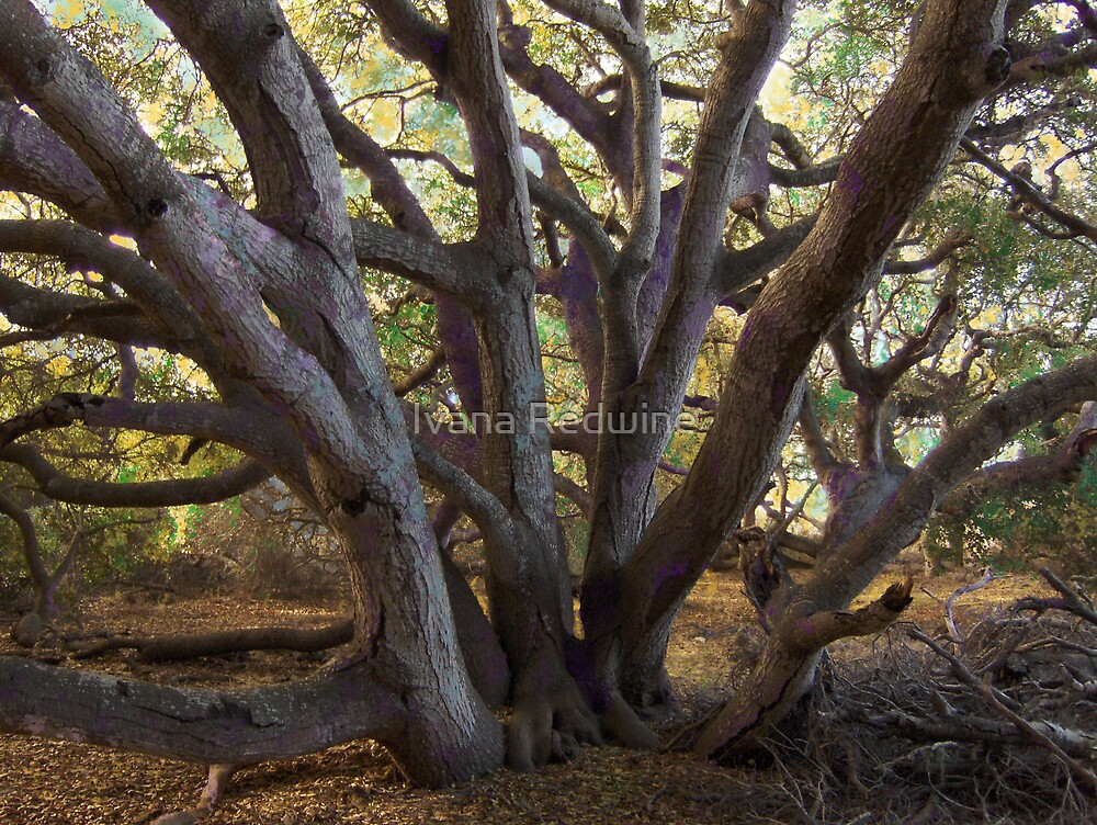 Branches, Purple-Tinged Bark and Joyous Sky  by Ivana Redwine