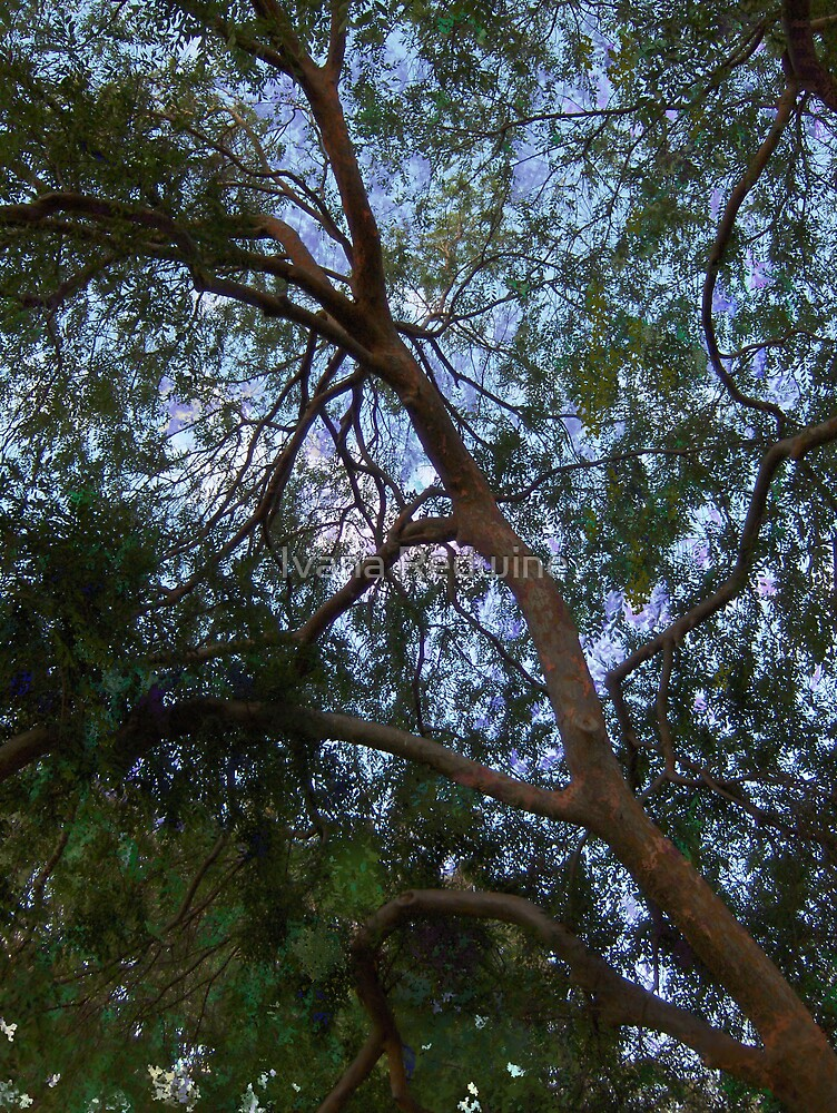 Sky Through Graceful Branches #1 by Ivana Redwine