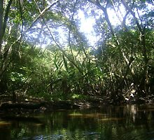 La Selva by lial