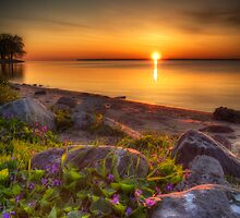Violet Sunrise by Jigsawman