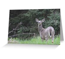 Lake Mendota Deer Greeting Card