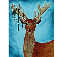 Deer Tangled in a Bush Photographic Print