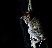 Spectral tarsier by Jeremy Weiss