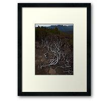 Ground Cover Framed Print