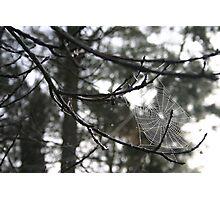 Winter Cobweb Photographic Print