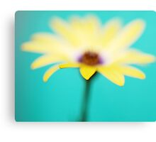 Yellow African Daisy on Brilliant Green Canvas Print