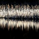 reed reflection by Gareth Stamp