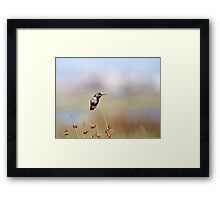 Lunchtime at the Beach Framed Print