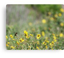 Hummingbird and California Wild Sunflowers Canvas Print