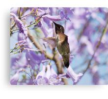 Hummingbird Visits the Jacaranda Canvas Print
