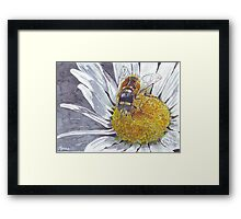 The Hoverfly and the Daisy Framed Print