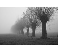 Knotted willows in misty land Photographic Print