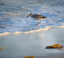 Sandpiper In Surf by Diana Ost