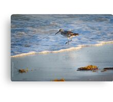 Sandpiper In Surf Canvas Print