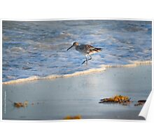 Sandpiper In Surf Poster