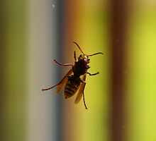 The Wasp by Sturmlechner