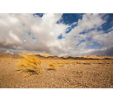 Dead dry grass in the Aravah Desert, Israel Photographic Print