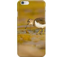 Common sandpiper (Actitis hypoleucos) foraging for food while wading in a pool.  iPhone Case/Skin