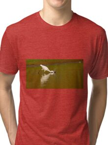 Little egret (Egretta garzetta) foraging for food while wading in a pool.  Tri-blend T-Shirt