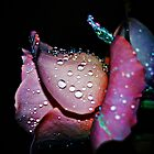 Rose dew by khadhy