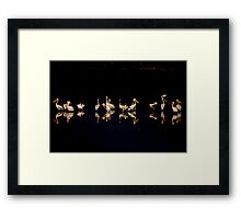A flock of pelicans at night  Framed Print