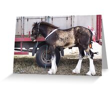 The shire horse foal Greeting Card