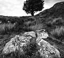 Ochill Stones and Tree by Kevin Skinner
