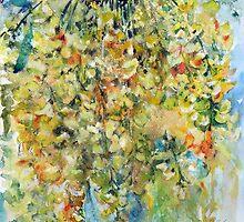 Yellow acacia by kovacsannabrigi