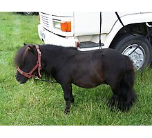 Tiny Tim .. the shetland pony Photographic Print