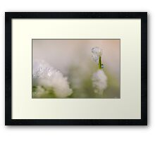 Young sapling covered in ice and snow  Framed Print