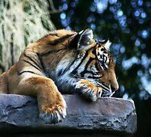 Lazing Around by LisaR