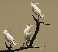 Three's a Crowd by Mukesh Srivastava